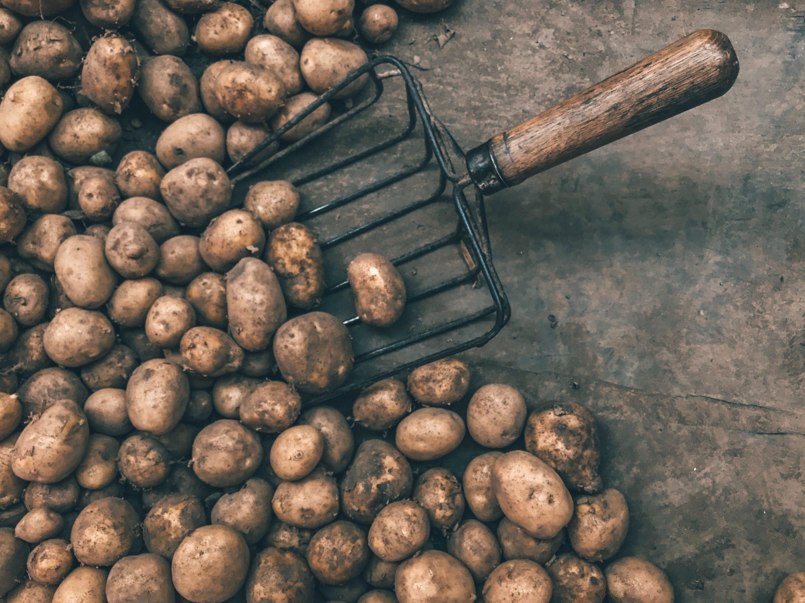 Spinat- og fetatærte med kartoffelbund